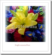 bright seasonal box .55-60.jpg.14