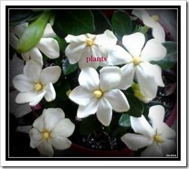 plants 30-10-2014 1-33-003